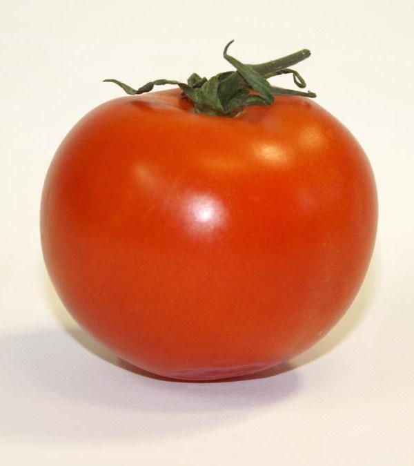 11_tomate_img_recherche