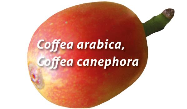 4_cafe_saviezvous
