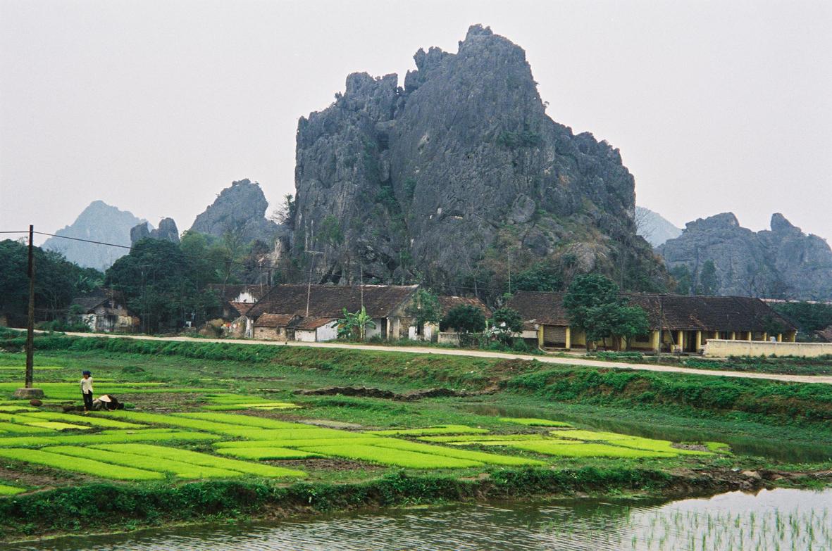 Scène de culture du riz au nord Viet-Nam