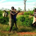 Groupe de cueilleurs d'ignames