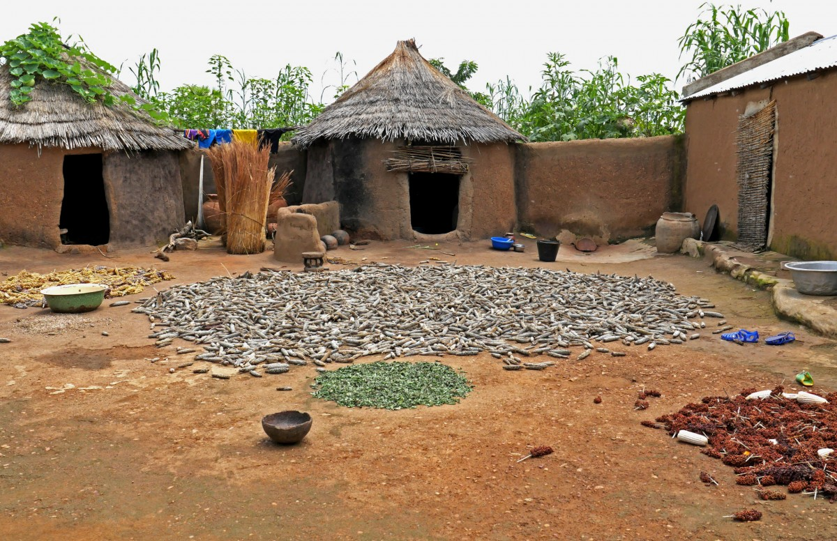Séchage et récolte du mil et du sorgho dans la cour d'une concession. Nalongue (canton de Nadjoundi, près de Dapaong).