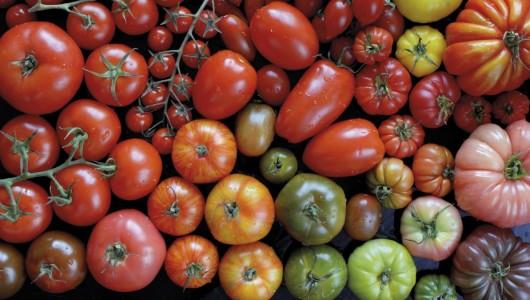 Histoires de tomates