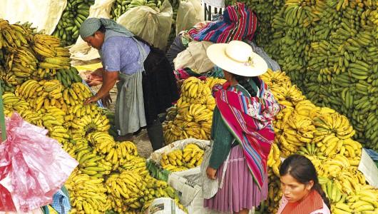 Histoires de bananes