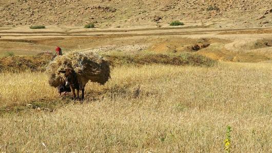 Aire de culture du blé