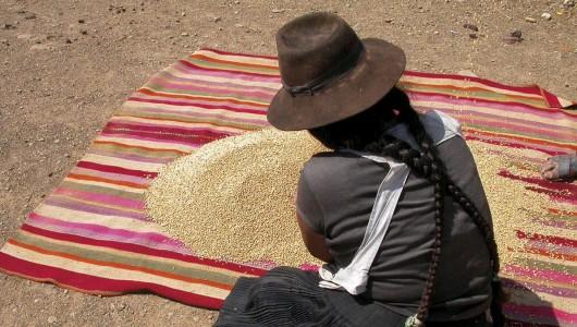 Histoires de blés