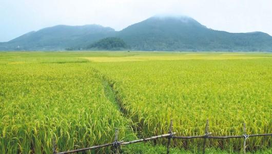 Aire de culture du riz